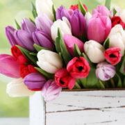 Ora fate fiorire la primavera su balconi e terrazzi di casa vostra