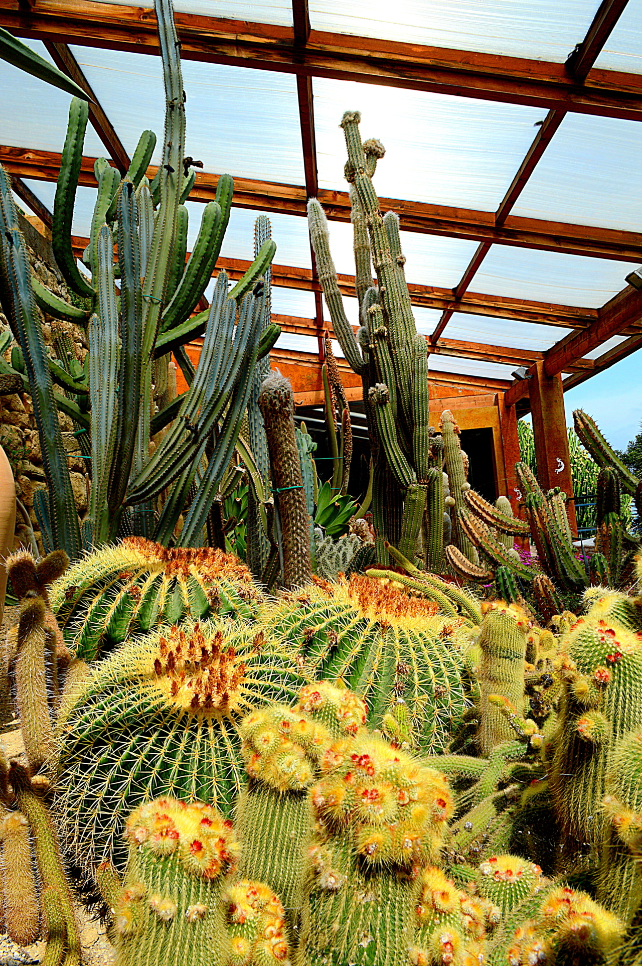 L 39 Eden Sulla Riviera Di Ponente Il Giardino Esotico