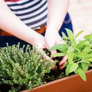 Ecco come trasformare il tuo davanzale in un piccolo orto