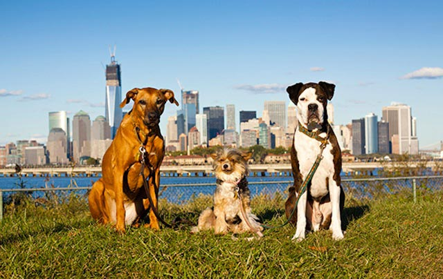 cani a new york