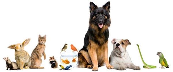 animali varie speci
