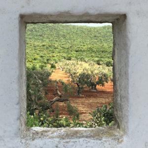 Vacanza in Puglia, alla scoperta delle 100 masserie