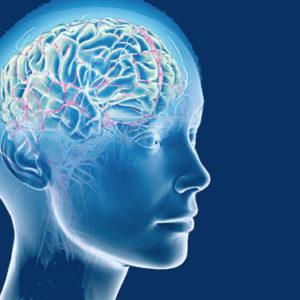Le 10 regole per avere un cervello al top