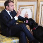 """La Francia ora ha anche un """"première chien"""", il labrador di Macron"""