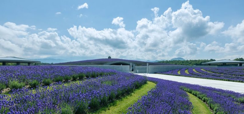 hill-of-the-buddha-tadao-ando-lavanda