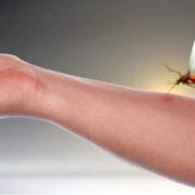 Scopri perché le zanzare hanno un... debole per te