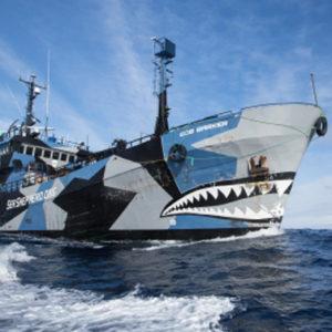 I pirati che difendono le balene alzano bandiera bianca