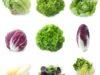 verdure-a-foglia
