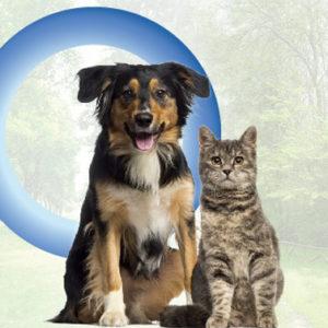 Bambini, cani e gatti: i nostri cuccioli vanno difesi dal diabete