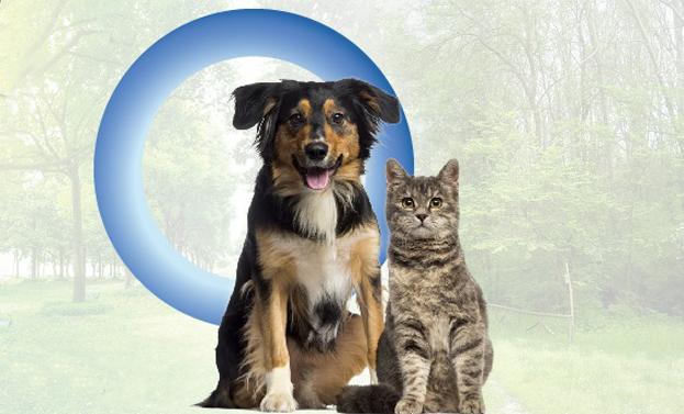 Diabete Umano E Animale