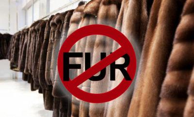 divieto pellicce copia