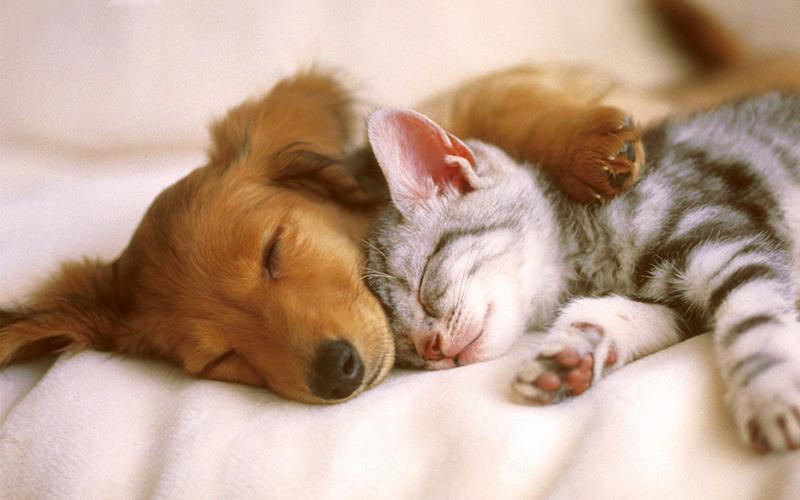 Animali-domestici-Cani-e-gatti-2-Imc-e1485256514577