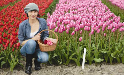 tulipani sardegna