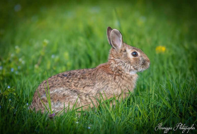 progetto-islander-coniglio