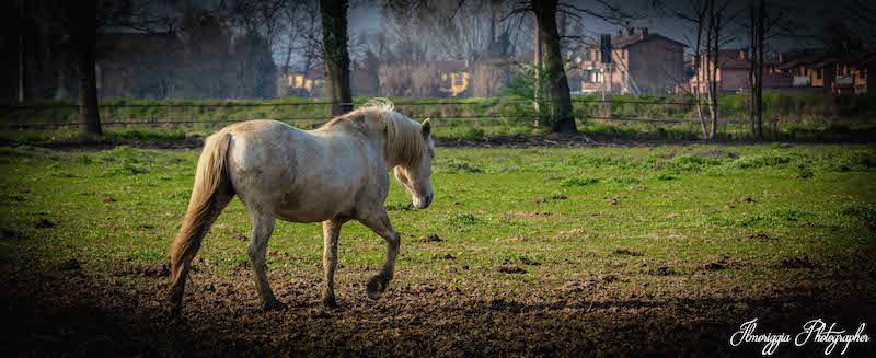 progetto-islander-cavallo