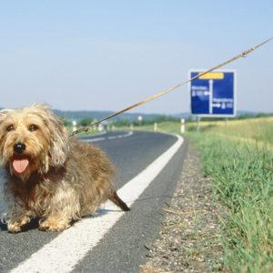 """Aderisci alla campagna """"Salva un amico"""" per cani abbandonati"""