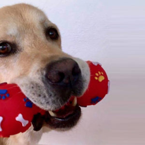 Si può amare un cane come un figlio? Ecco la toccante risposta