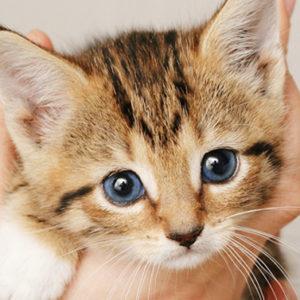 Se ami i gatti, c'è un'isola greca che te ne affida 55 per sei mesi