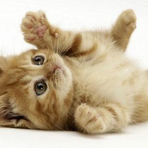 L'uomo che ama i gatti è il partner ideale con cui vivere