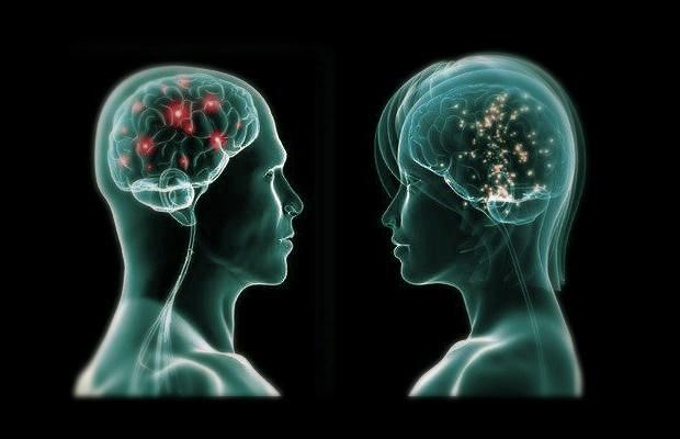 cervello-donna