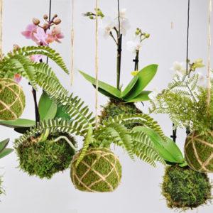 Addio vecchio bonsai: adesso dal Giappone è arrivato il kodekama