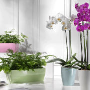 Le 5 piante d'appartamento che rendono più pura l'aria di casa