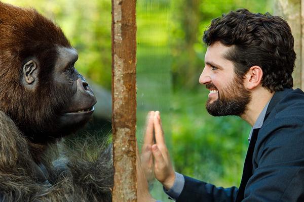 Attenti-al-gorilla-il-film-