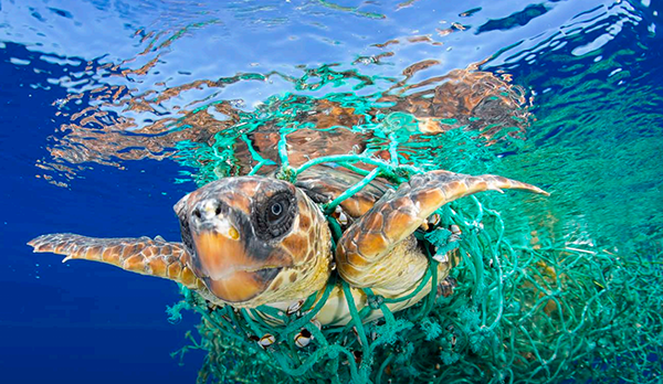 plastica tartaruga