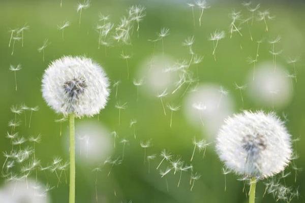 allergia-polline